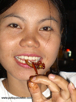 Thailand food -Insects